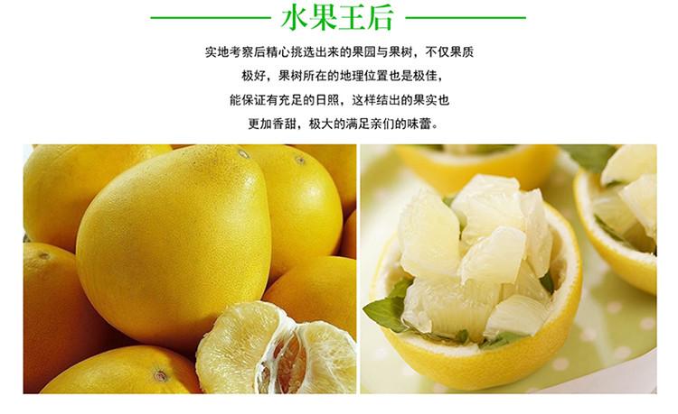 柚子图1.jpg
