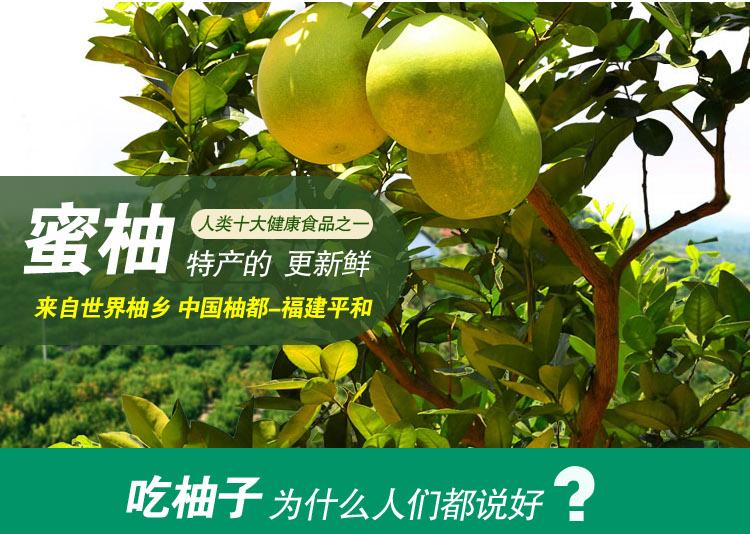 柚子2.jpg
